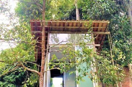 Rumah Pokok Idaman Kat Plateau Farm
