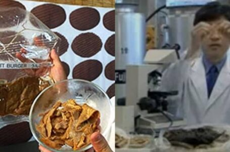 Jepun Cipta Burger Dari Najis Manusia, Mitos Ke Fakta?