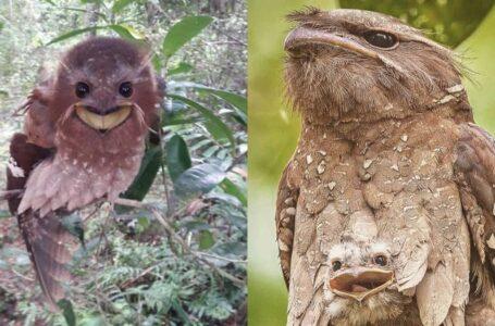 Comel Tapi Garang, Ini Fakta Menarik Pasal Burung Malas